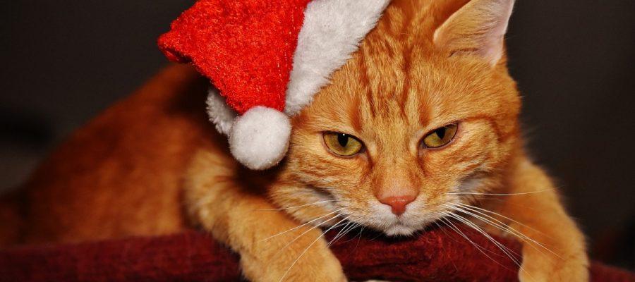 Shopping - Ratgeber cat-1898517_1920-900x400 Tierisch frohe Weihnachtswelt