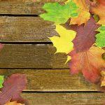 Shopping - Ratgeber autumn-432299_1920-150x150 10 Tipps für eine gelungene Outdoor-Herbst-Party