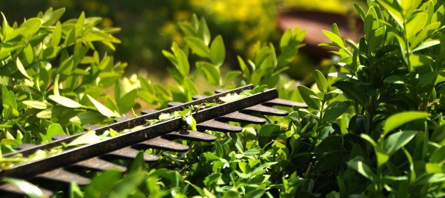 Shopping - Ratgeber hedge-3393849_1920-900x400 Schöne Hecken im Garten mit der richtigen Heckenschere